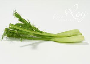 Fenouils - Eric Roy maraîcher