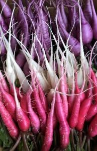 Radis asiatiques mixtes / Asian radishes